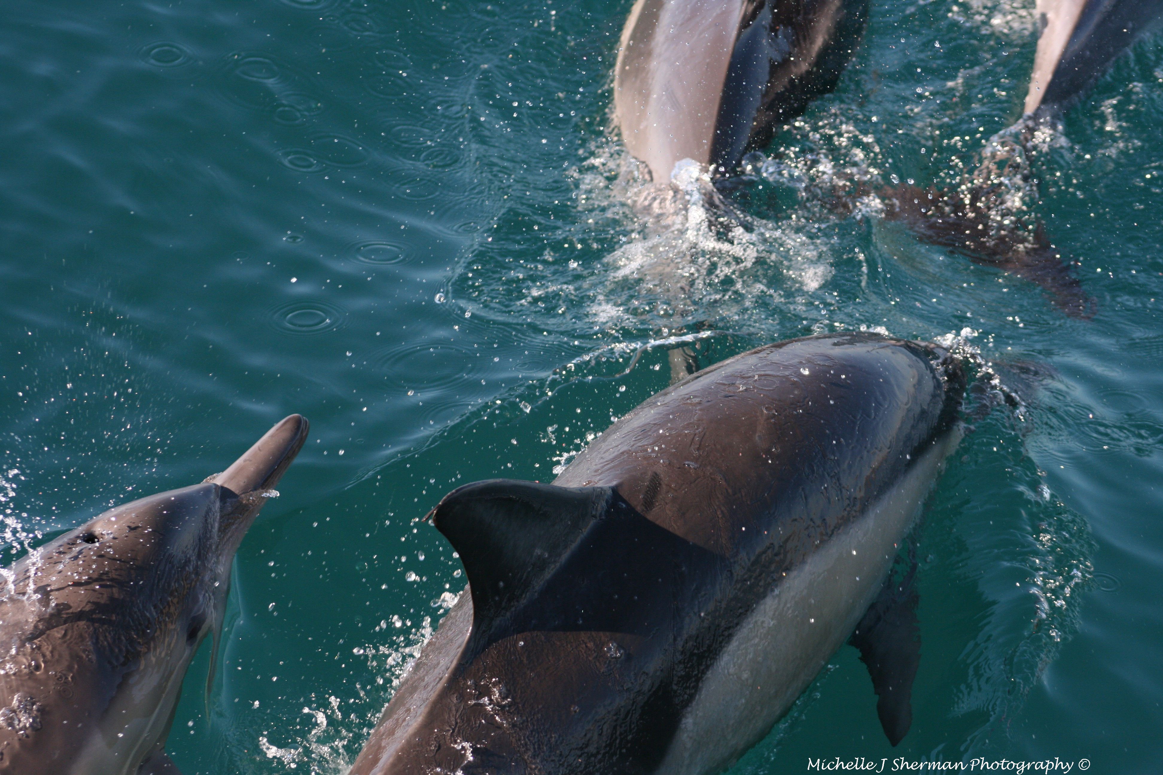 """Mich's Monday Mantra """"Play Like A Dolphin"""""""